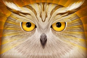 burung - ronggolawe